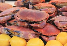 Crabs and lemons. Closeup of fresh crabs and lemons on display Royalty Free Stock Photos