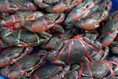 Crabs at market Stock Image