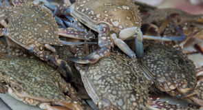 Crabs on the market Royalty Free Stock Photo