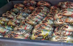 Crabs at market. stock photography