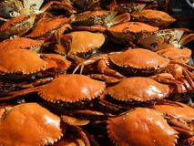 Crabs and other seafood. At night market in Ho Chi Minh City Saigon Vietnam Stock Photo