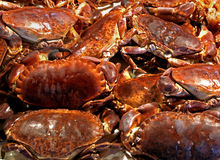 Crabs pile Stock Image