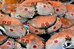 Crabs in raw Stock Photo