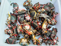 Crabs raw fresh in market Stock Photography