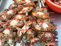Crabs raw fresh in market Stock Image