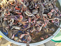 Crabs raw fresh in market Royalty Free Stock Images