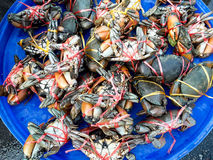 Crabs raw fresh in market Stock Photo