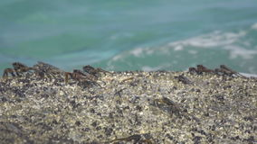 Crabs on the rock at the beach stock video footage