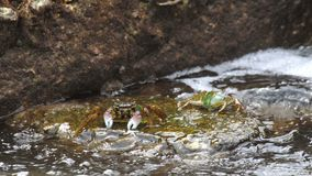 Crabs on the rock at the beach. Rolling waves, close-up stock video footage