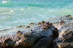Crabs on a rock. Crabs have a sunbath on a rock near the sea stock photography