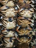Crabs in row at the market. Fresh seafood to buy Stock Photos