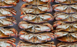 Crabs in rows Stock Images