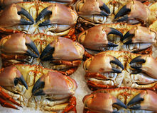 Crabs for sale Royalty Free Stock Image