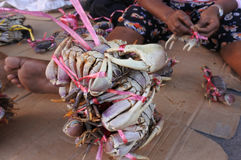 Crabs for sale in a local market in Fiji Royalty Free Stock Photography