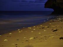 Crabs on the sandy beach at night Stock Photos