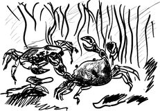 Crabs Stock Photography
