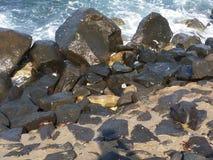 Crabs. Sea rocks suny day Stock Image