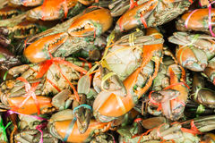 Crabs in seafood market Stock Images