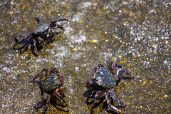 Crabs on seashore Stock Photo