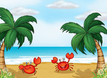 Crabs in the seashore. Illustration of crabs in the seashore Royalty Free Stock Images