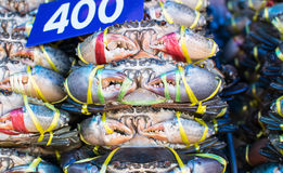 Crabs. Selling giant crabs at the seafood market in Chonburi Thailand royalty free stock image