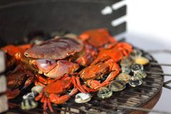 Crabs shrimps on charcoal grill Stock Photos