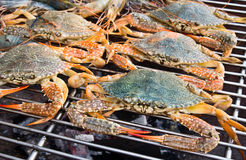 Crabs and shrimps Stock Image