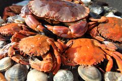 Crabs shrimps Stock Images