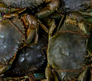 Crabs, Sinagpore Stock Photos