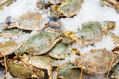 Crabs sold in  market Stock Photos