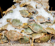 Crabs sold in market Stock Images