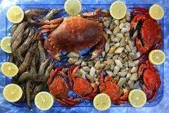 Crabs tellin shrimp clams and lemon. Seafood still life Stock Photography