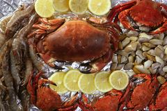 Crabs tellin shrimp clams and lemon Stock Photography