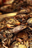 Crabs (Thai Food) Royalty Free Stock Images