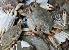 Crabs. On the Thailand market stock images