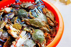 Crabs and wholesale Royalty Free Stock Photo