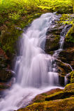 Crabtree cai em George Washington National Forest em Virgínia Foto de Stock