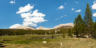 Sierra Nevada Meadow Stock Photos