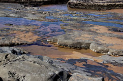 Craca e rochas Encrusted Limpet na maré baixa Fotografia de Stock