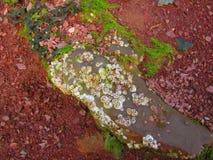 Cracas ou limpets em uma rocha Foto de Stock Royalty Free