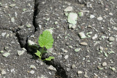 Through a crack in the asphalt breaks and grows a sprout of grass with leaves. stock photo