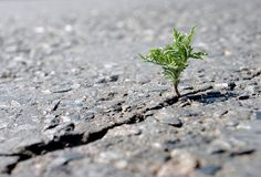 A crack in the asphalt. Grass wormwood growing in a crack on the road. Copy spaces. A crack in the asphalt. Grass wormwood growing in a crack on the road royalty free stock photo