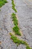 Crack in asphalt. Road damage: grass growing in cracked asphalt royalty free stock images