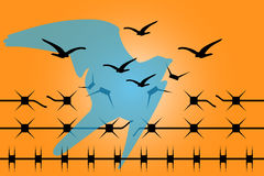 Crack the barbed wire and fly to freedom. Barbed wire where in the knots can recognized silhouettes of birds and fly to freedom Royalty Free Stock Photo