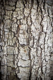 Crack Bark. Stock Image