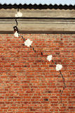 Crack in a brick wall. Alebaster markers are applied to check if crack gets wider as time goes on Stock Images
