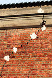 Crack in a brick wall. Royalty Free Stock Photos