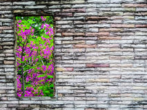 Crack brick wall and  purple and pink flower green tree Stock Images