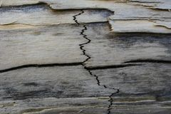 Crack on a dried branch from a tree royalty free stock photo