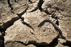 Crack dry ground on lake. Concept drought Royalty Free Stock Photo